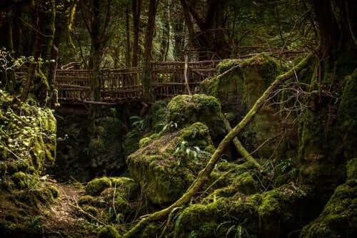 Bir ormanın içerisindeki bir köprünün çizimi.