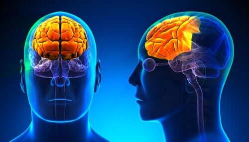 renkli insan beyni ve alkol bağımlılığı