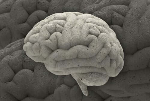 Büyüleyici Nörobilim Alanında Üç Örnek Vaka