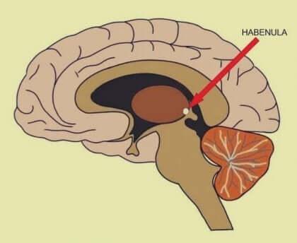 Beynin hayal kırıklığı merkezi