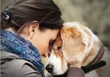 Köpekler sizi çıkarsız sever.