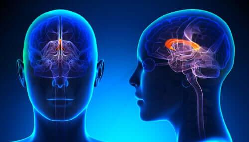 Mavi bir beyin