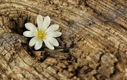Bir ağacın gövdesinden çıkmış bir çiçek.