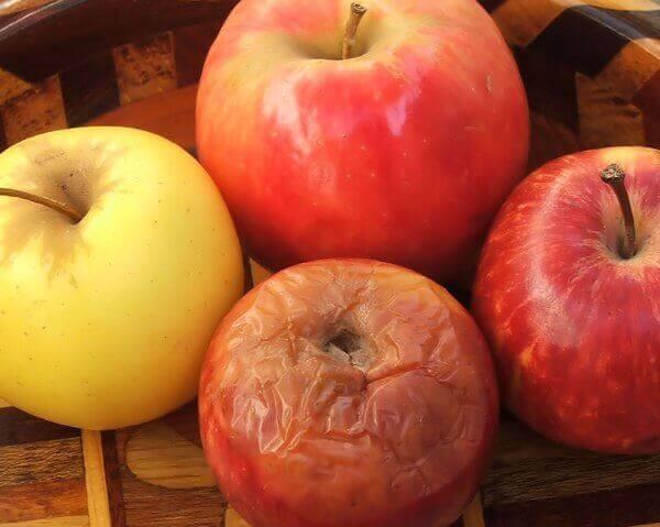 Çürük elma ile temas eden diğer elmalar da çürümeye başlar, iş yerindeki çürük elma da böyledir.