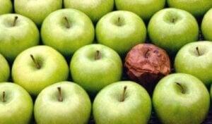 İşyerinde Çürük Elma Teorisi