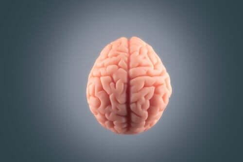 Plastik bir beyin.