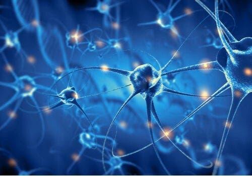 Nöronların rolü.