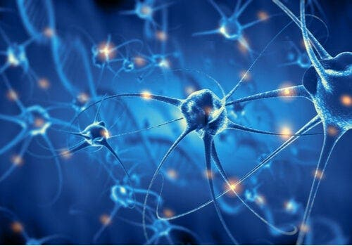 Nöronların faaliyetleri.