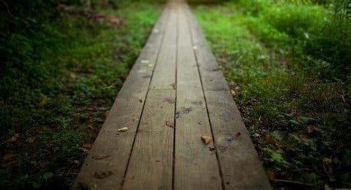 Bahçede tahtadan yol