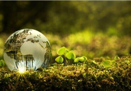 Daha İyi Bir Çevre İçin Neler Yapabilirim?