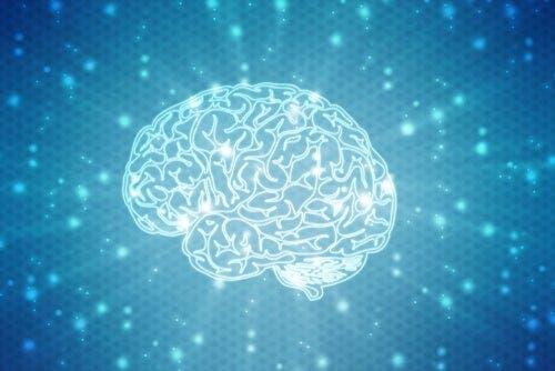 Beyin ve nöropsikolojik gelişim.