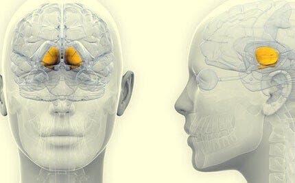 orta beyin ve karanlık madde