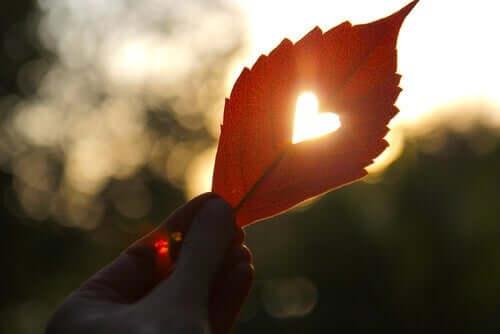 Üzerinde kalp şekli olan yaprak
