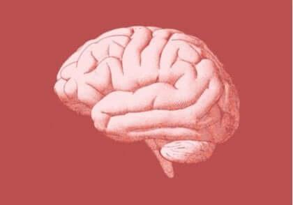 insan beyni görseli