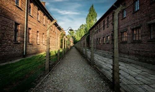 Mala ve Edek toplama kampında