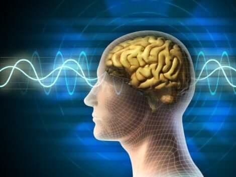 İnsan beyni ve kıvrımları
