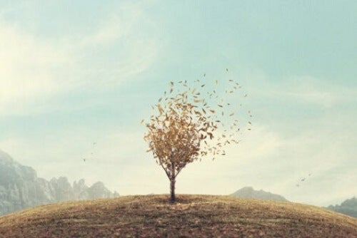 Bir tarlanın ortasında tek başına duran bir ağaç.