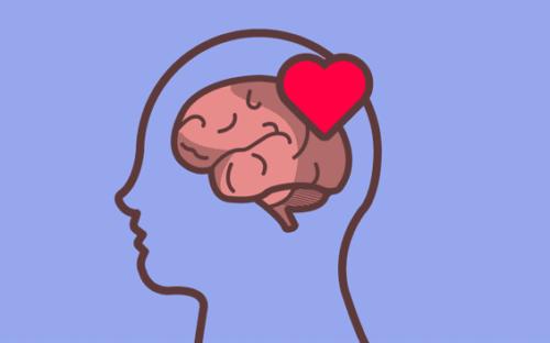 Bir insan kafasının içerisine yerleştirilmiş beyin ve kalp.
