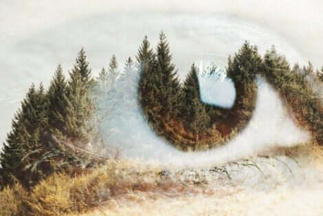 Göz şeklinde orman