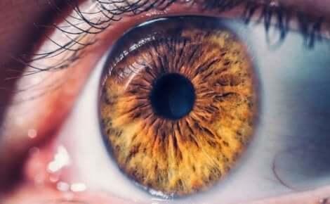 sarı göz ve fotoğrafik hafıza