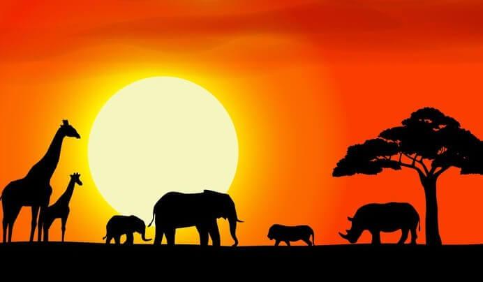 Afrika'da hayvanlar