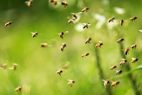 uçan arı sürüsü ve apifobi belirtileri