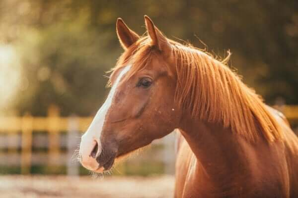 At Korkusu veya Hipofobi Olarak Anılan Durum