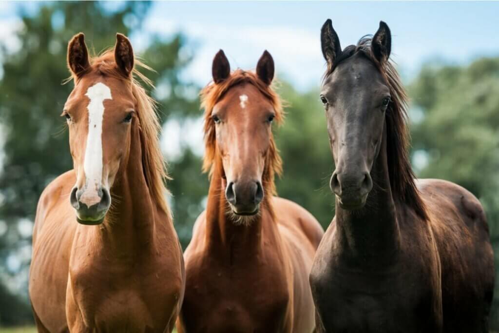 Atlar en iyi dostlarımız