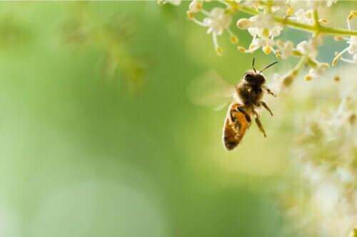 uçan arı ve arı korkusu abifobi