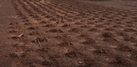Yacouba Sawadogo Sahara Çölü'nde bitki yetiştirmeyi başarmış