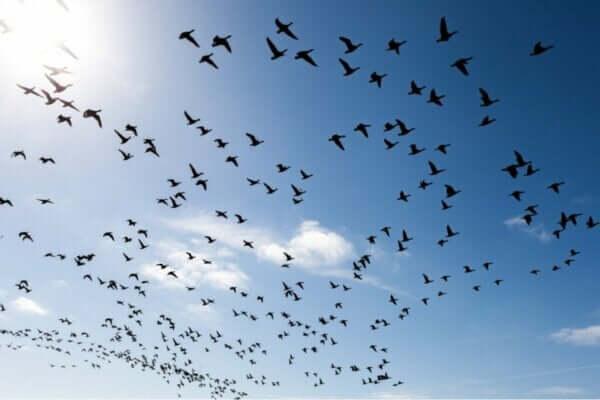 Kuş Korkusunu Yenmek İçin Üç Yöntem