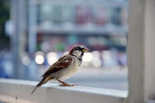 kuş korkusunu yenmek: pencere eşiğinde duran kuş