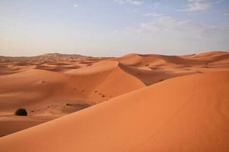 Uçsuz ve bucaksız Sahra Çölü