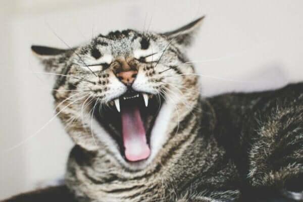 Ailurofobi veya Kedi Korkusu - Nedenleri ve Tedavisi