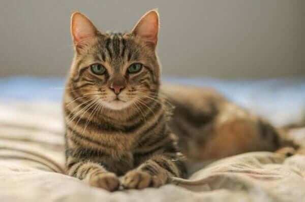Kedi korkusu mantıklı bir durum mu?