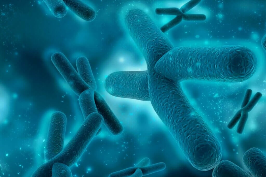 Kromozom topluluğu