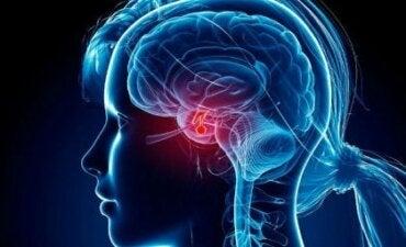 Hipofiz Bezi: Büyüleyici Bir Hormon
