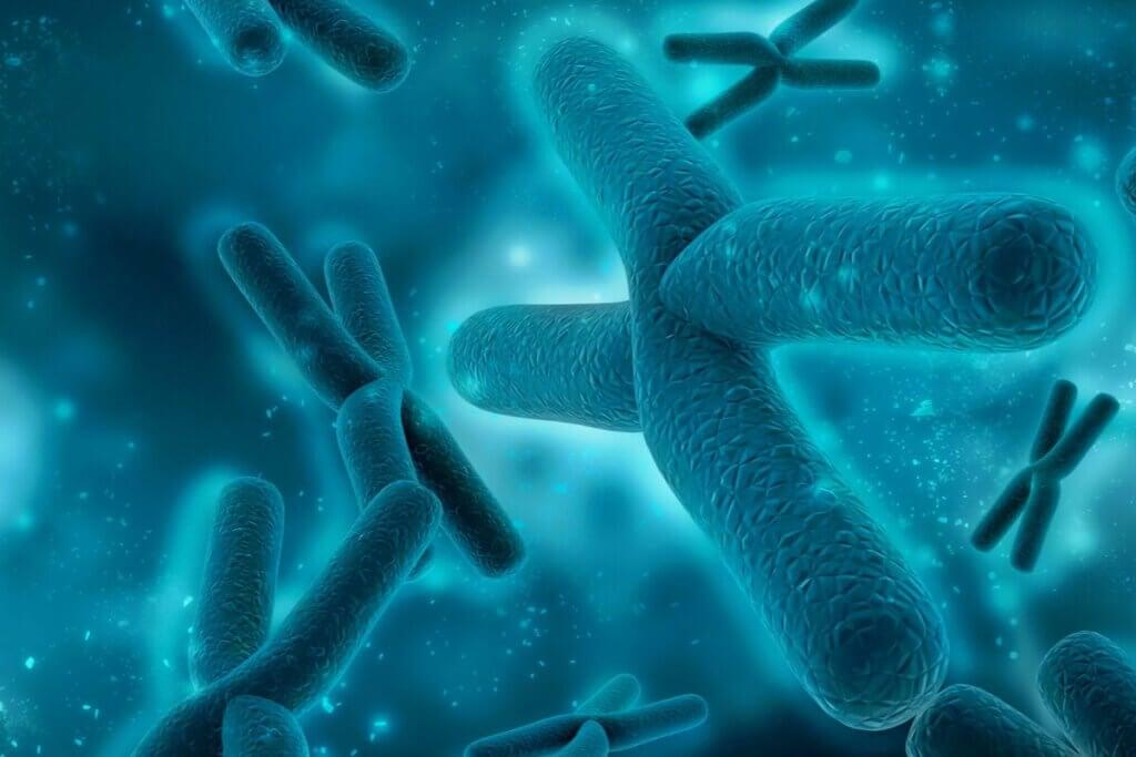 kromozomlar