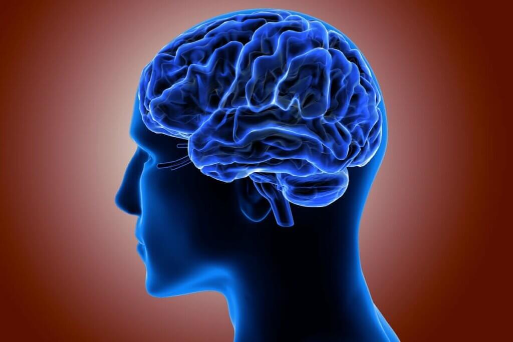 serebral korteks
