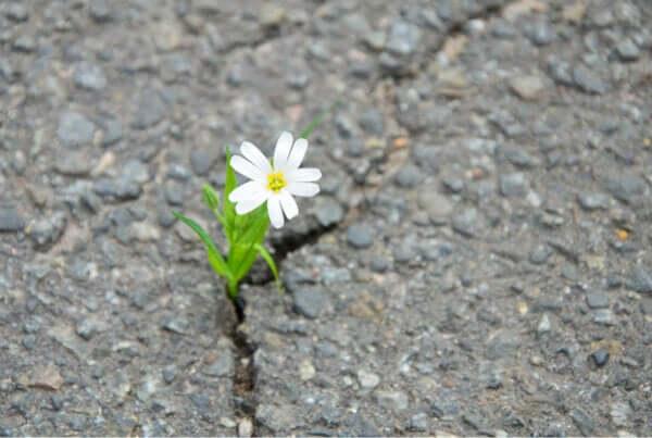 Asfaltı delip geçen çiçek.