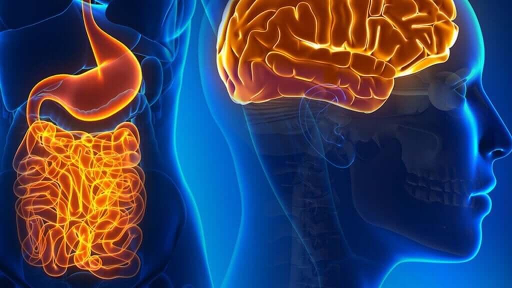 Bağırsak Nöronları: Fonksiyonları ve Beyinle Bağlantıları