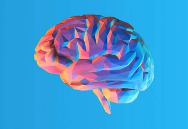 Beynin Kıvrımları Neden Var ve Ne İşe Yararlar?