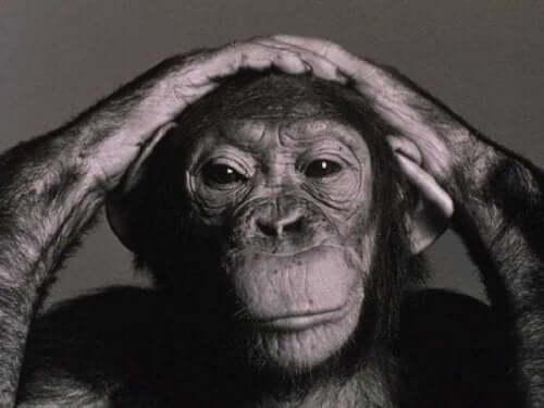 Endişeli maymun.