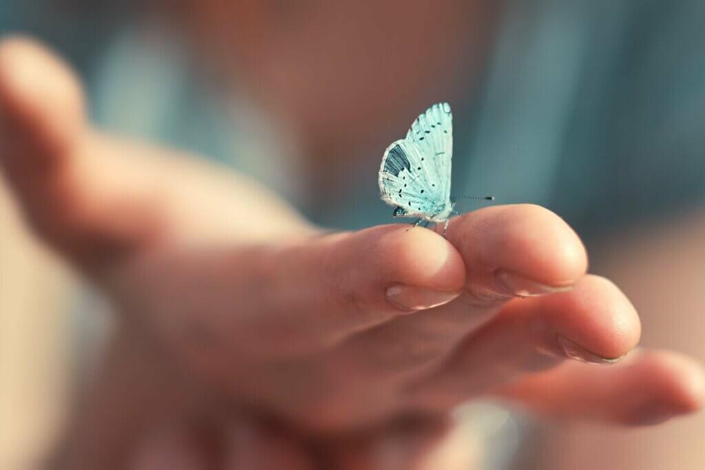 mavi bir kelebek