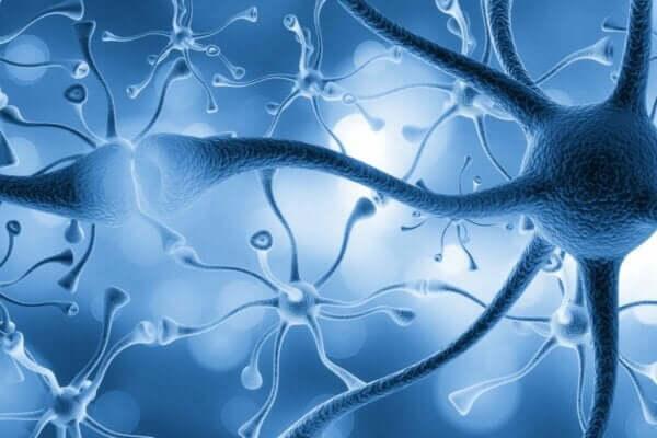 Nöron ölümleri.