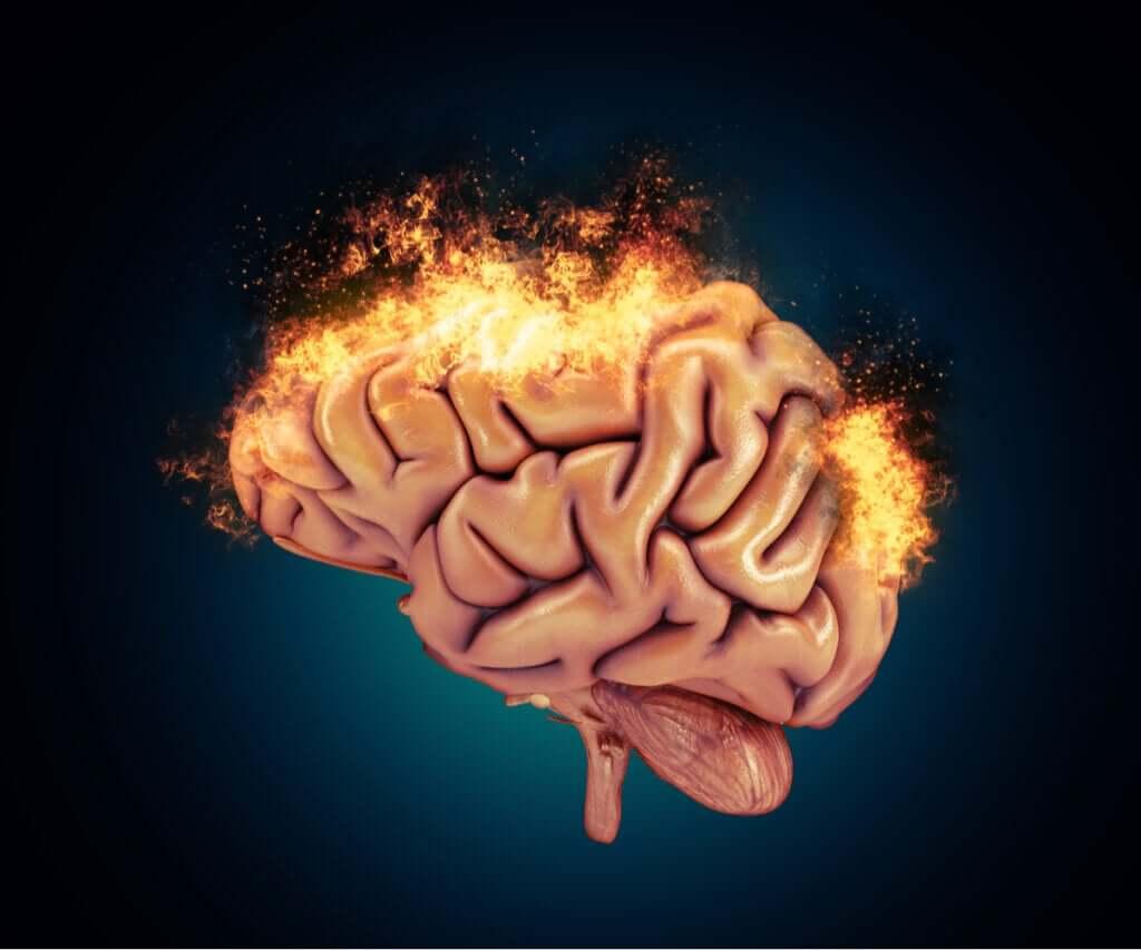 Saldırganlık ve Nörobiyolojik Temelleri