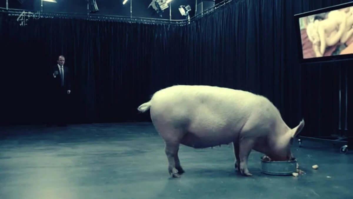 yemek yiyen domuza bakan adam