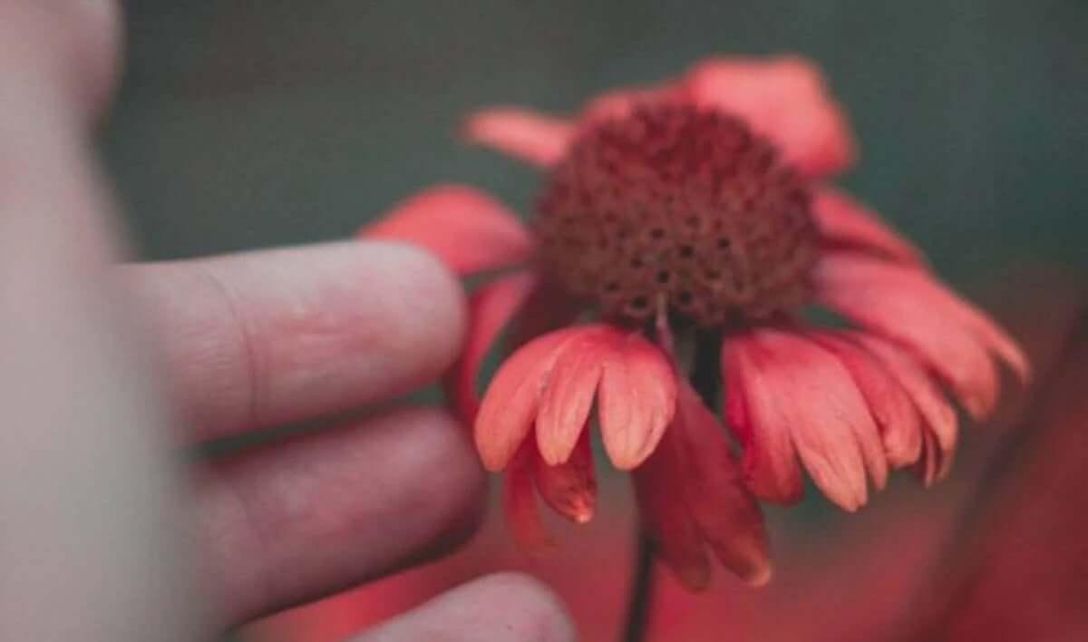 hasar görmüş çiçeğe uzanan eller
