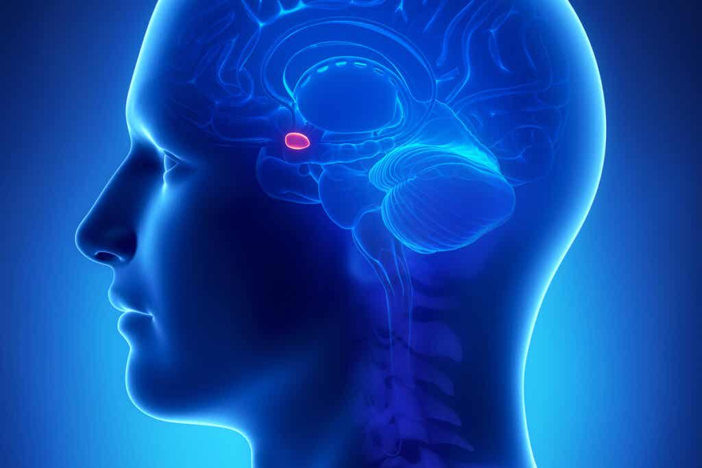 beyinde amigdala